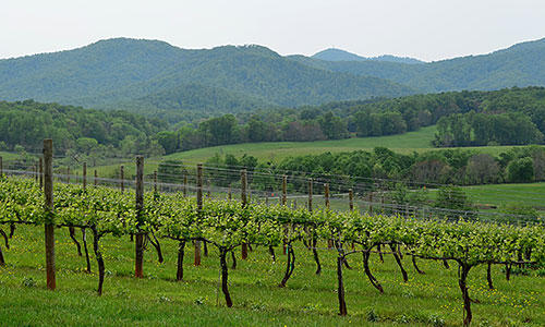 Winery in Charlottesville, Virginia