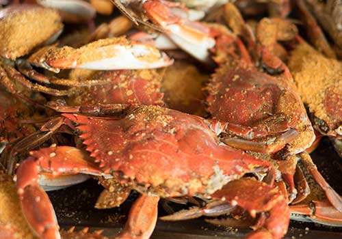 Maryland Blue Crabs from Chesapeake Bay