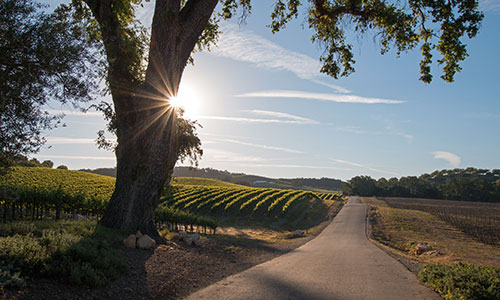 Wine country in Paso Robles, California
