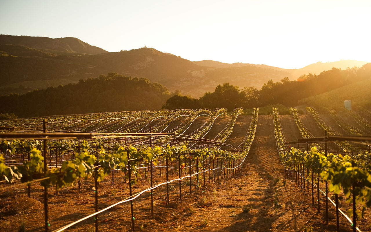 The Best Wine Country Vacations in the U.S.
