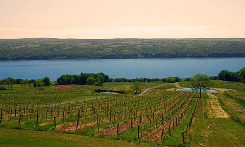 Winery in Watkins Glen, New York